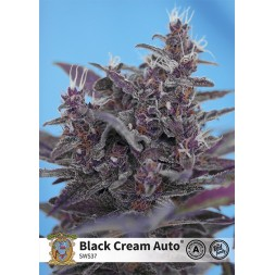 Black Cream Auto