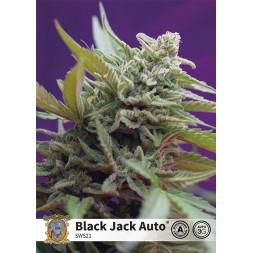 Black Jack AUTO