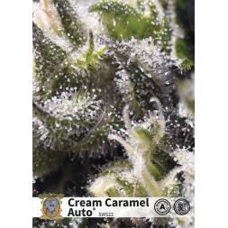 Cream Caramel AUTO