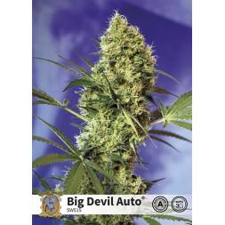 Big Devil AUTO