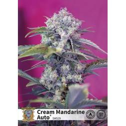 Cream Mandarine AUTO