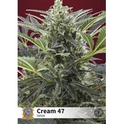 Cream 47